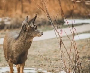 deer standing in forest