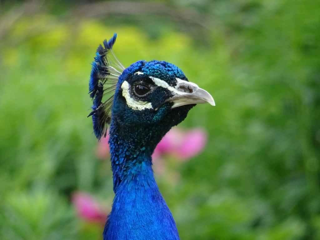 animal animal photography beak bird