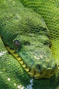 animal eyes head green