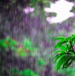 selective focus photo of obalte green leafed plants during rain