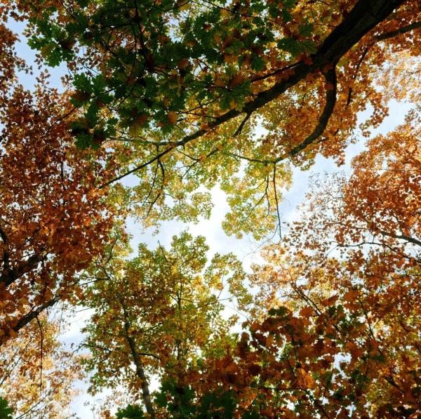 autumn season under a sunny day