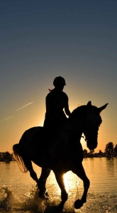 silhouette of person riding horse on body of water under yellow sunset